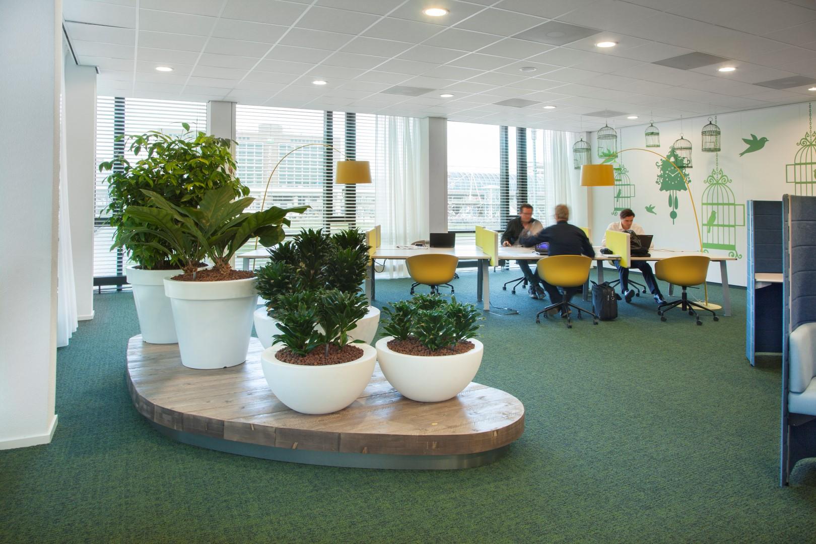 Planten Op Kantoor : Deze kantoorplanten zorgen voor meer gezondheid en