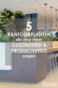 kantoorplanten-gezondheid-productiviteit